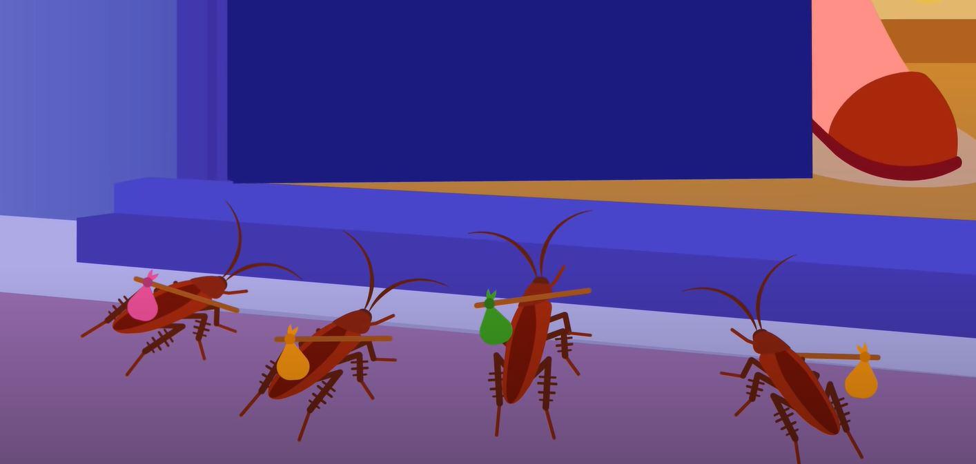 Прощаемся с тараканами после покупки средств Фас и Аверфос в Тюмени